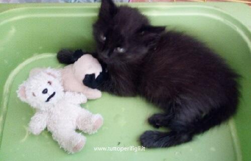 gatto e orsacchiotto